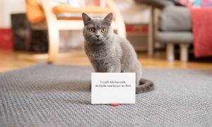 Philosophie-Fortbildung-Supervision: Mag.a Tina Deutenhauser-Wien-7140